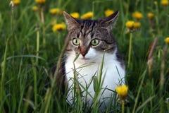 一只小猫在老鼠狩猎的晚上在领域 免版税库存照片