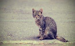 一只小猫的葡萄酒照片在街道上的 免版税库存图片