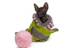一只小猫的画象在毛线衣的 库存照片