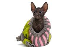 一只小猫的画象在毛线衣的 免版税库存照片