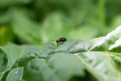 一只小甲虫 免版税库存照片