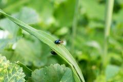 一只小甲虫 免版税图库摄影