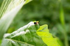 一只小甲虫 库存图片