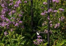 一只小白色蝴蝶在庭院里 库存图片