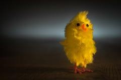 一只小的复活节小鸡全部独自地 免版税库存照片