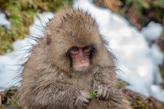 一只小的猴子的画象 免版税库存照片