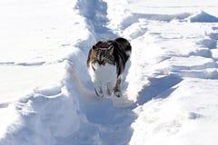 一只小的白棕色猫通过雪愉快地跳在冬天 库存图片