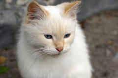 一只小的白色猫在医院庭院居住 免版税库存图片