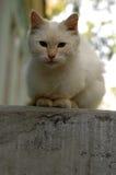 一只小的白色猫在医院庭院居住 库存图片