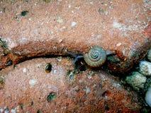 一只小的蜗牛和大蜗牛 库存照片