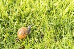 一只小的蜗牛 免版税库存图片