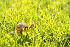 一只小的蜗牛 免版税库存照片