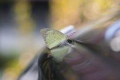 一只小的蝴蝶早晨 免版税库存照片