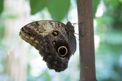一只小的蝴蝶 库存图片