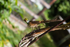 一只小的鸟在庭院里坐作为装饰 免版税库存图片