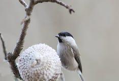 一只小的鸟坐饲养者 库存照片