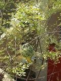 一只小的鸟筑巢 免版税库存照片