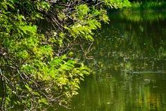 一只小的鸭子 免版税图库摄影