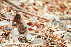 坐在滑稽的行动的一只小的猴子 库存图片