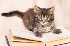 一只小蓬松猫坐在一本开放书 读书 利息 免版税库存图片