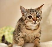 一只小虎斑猫 库存照片