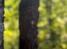 一只小蜘蛛编织一个网 免版税库存图片