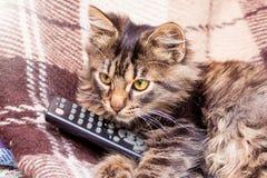 一只小镶边猫在控制台的爪子保持swi的 库存照片