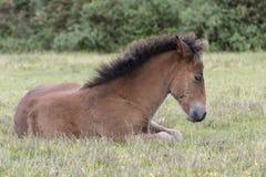 一只小马驹在新的森林里 库存图片