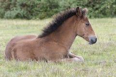 一只小马驹在新的森林里 免版税库存照片