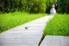 一只小鸟遇见新娘和新郎在一条木道路 免版税库存图片