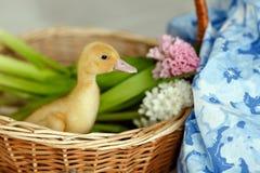 一只小黄色鸭子在与花的一个篮子坐 免版税库存图片