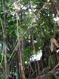一只巨大的蜘蛛在巴厘岛,一个徒步旅行队在巴厘岛 免版税图库摄影