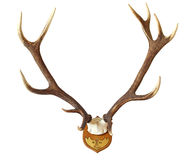 一只巨大的雄鹿的鹿角 免版税库存图片