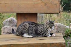 一只幼小灰色猫 库存照片