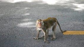 一只幼小猴子 库存图片