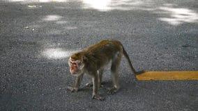 一只幼小猴子 免版税库存照片