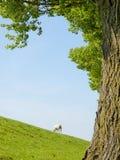 一只幼小羊羔的春天图象 库存图片