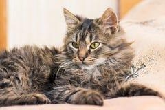 一只幼小蓬松猫在bedroom_的床放置 库存照片