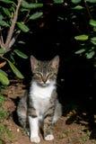 一只幼小虎斑猫的画象在庭院里 免版税库存图片