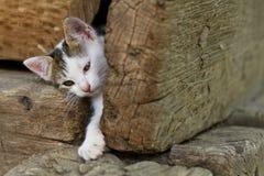 一只幼小逗人喜爱的猫 图库摄影