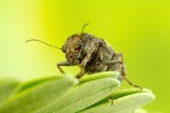 一只微小的甲虫的宏观照片 库存照片