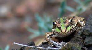 一只微小的青蛙在森林里 免版税库存图片