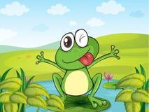 一只微笑的青蛙 免版税库存图片