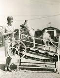 一只德国牧羊犬得到他的锻炼 免版税库存图片