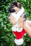 一只德国牧羊犬的滑稽的小的小狗 图库摄影