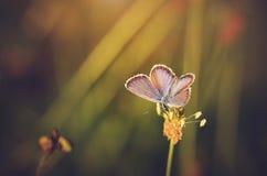 一只惊人的蝴蝶的特写镜头照片 库存照片