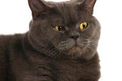 一只惊奇的猫的画象 免版税库存照片