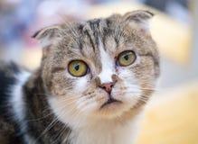 一只想知道的猫 库存图片