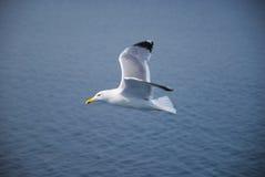 一只愉快的海鸥 免版税库存照片