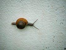 一只慢蜗牛 免版税库存照片